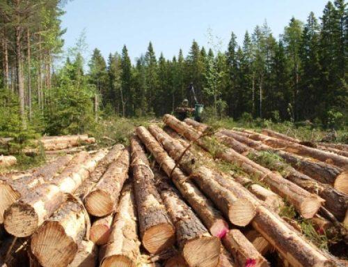 Aborígenes panameños defienden su gestión sostenible en materia forestal