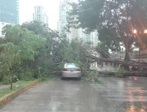 Inundaciones, caídas de árboles y afectación del tráfico vehicular, luego de fuertes lluvias