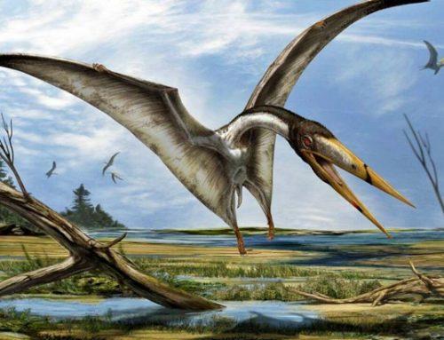 Un fósil muestra una nueva clase de reptiles voladores