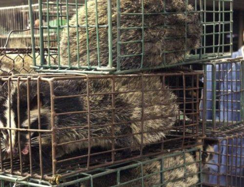 Una campaña mundial reclama la prohibición de los mercados de animales vivos