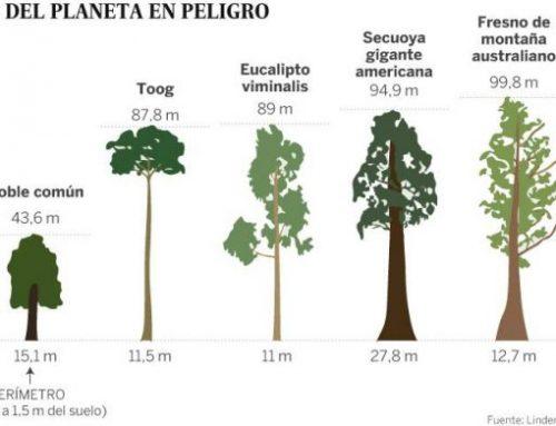 Árboles cada día más pequeños