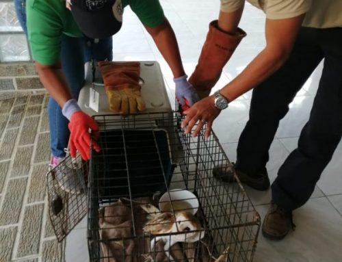 Para conservar la biodiversidad biológica, Los Santos desarrolla acciones resilientes