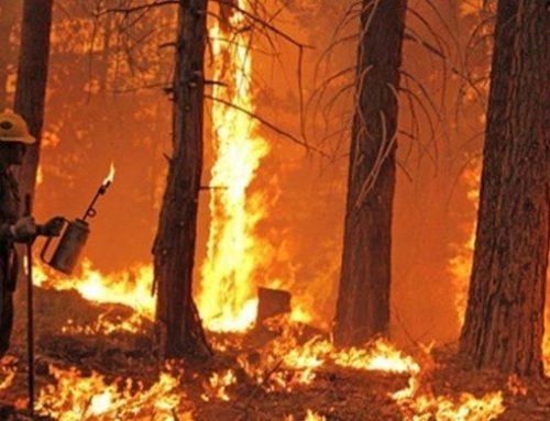 Europa avisa de la ola de incendios forestales este verano