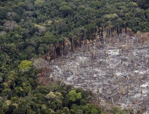 Colombia perdió 158.894 hectáreas de bosques en 2019 por la deforestación