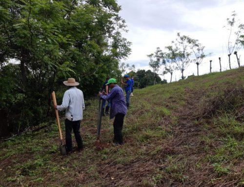 Reforestan en Los Santos por celebración del Día de la Conservación de los Suelos