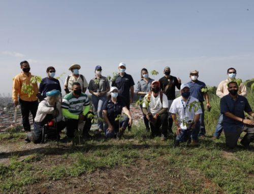 Cierran ciclo de reforestación en el Cerro La Cruz en Los Andes