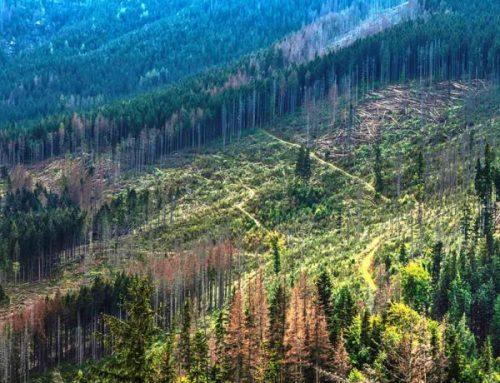 Amazonia pierde millones de toneladas de carbono debido a la deforestación