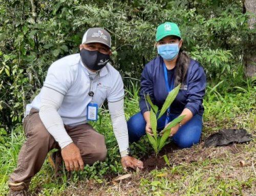 200 plantones se siembran, en naciente río David, por el Comité de Cuencas Hidrográfícas