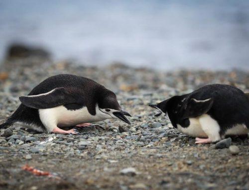 Científicos proponen nueva clasificación de la Antártida según la vegetación