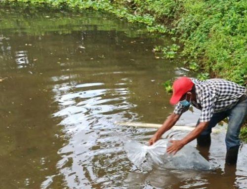 67 familias son beneficiadas con la siembra de tilapias