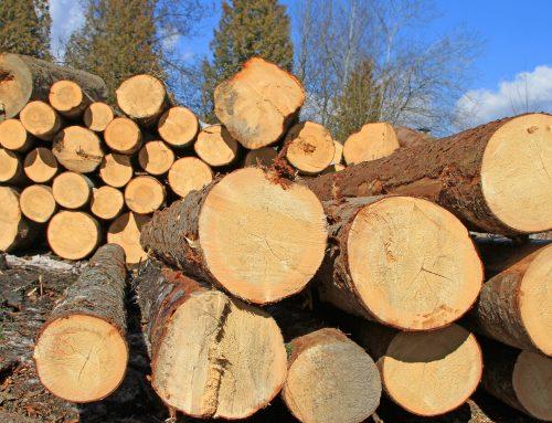 Abren procesos a tres implicados en adquisición y comercialización de madera de procedencia ilegal.