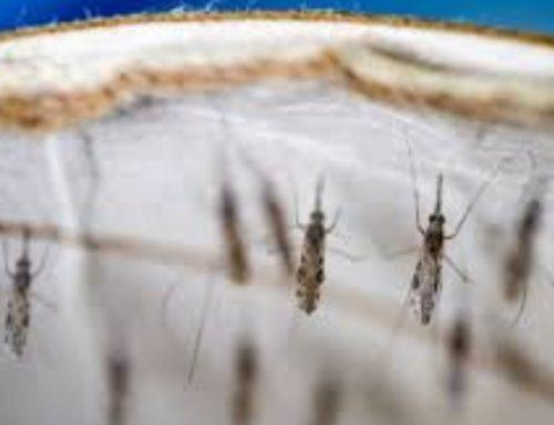 La OMS certifica que Argentina y Argelia están exentas de malaria