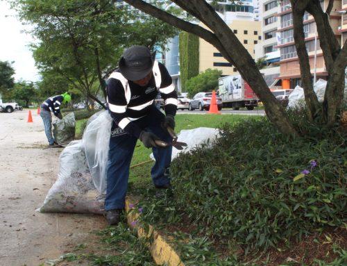 MOP realiza mantenimiento en áreas verdes de la Cinta Costera I, II y III
