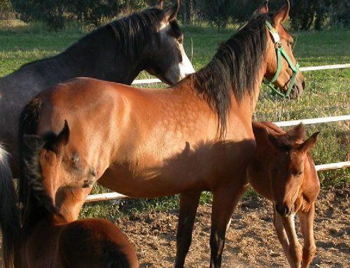 Costa Rica avanza en tratamiento a base de plasma de caballos para Covid-19.